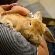 """Leggi """"Benedizione degli animali a Redondesco"""""""